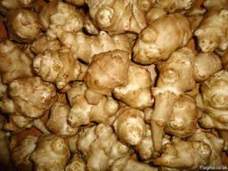 Семена Топинамбур