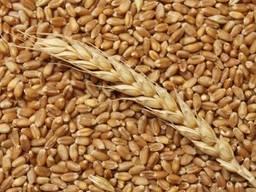 Sell agricultural enterprise