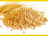Wheat - photo 1